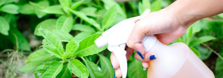 Ce sunt insecticidele?