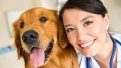 De ce este important pentru tine ca medic veterinar sa citesti cartea Kirk's Current Veterinary Therapy XV, 15th Edition?
