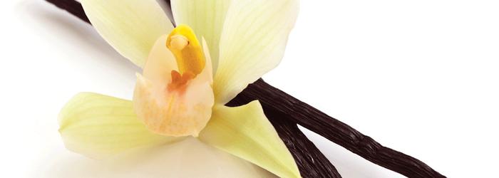 Descopera istoria vaniliei, inca din cele mai timpurii vremuri